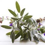 Gyógynövények és kiegészítők a menopauzában