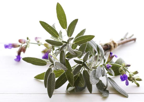 Fitoösztrogénben gazdag gyógynövények.