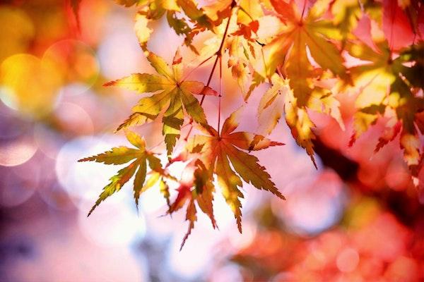 Őszi falevelek között beáramló fény.