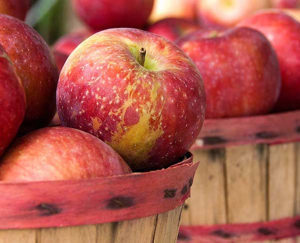 Kisebb hordókban sok-sok piros alma.