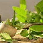 Gyógyító növények torokfájásra