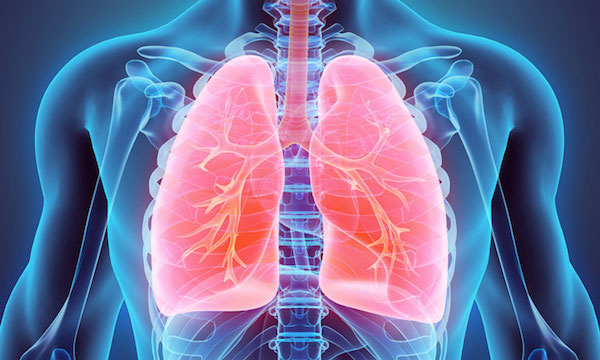 Tüdő sematikus ábrázolása.