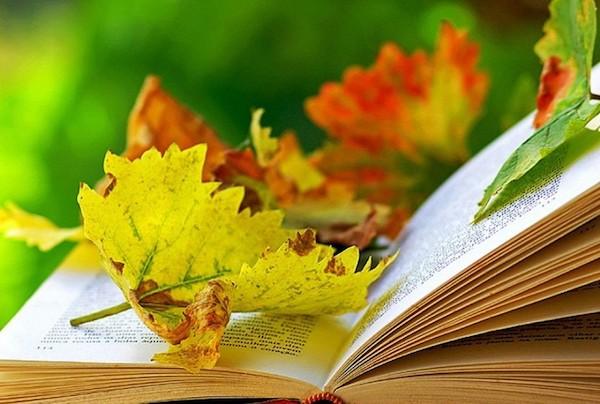 Kinyitott könyvön őszi falevelek.