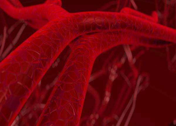 Artériák és kisebb erek vérhálózata.