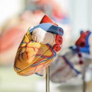 Mi okozhat szívbetegségeket és szívinfarktust?