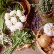 Hasznos gyógynövények az agy számára
