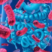 Hasznosak és egészségesek: probiotikumok