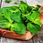 Csökkenti az édesség utáni sóvárgást: borsmenta