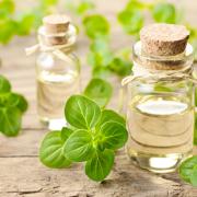 Fura az illata, de az egészséget szolgálja: oregánóolaj