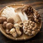 A gombák gyógyítanak?