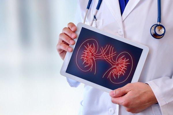 Tableten mutatja egy orvos a vese rajzát.