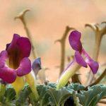 Gyógynövények és vitaminok hátfájásra