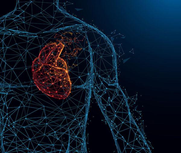 Emberi testben a szív elhelyezkedése.