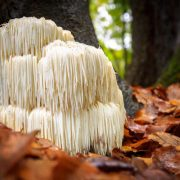 A gombákban lakozó erő az emberre is hatással van