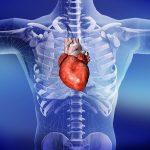 A szívelégtelenség és a csontritkulás