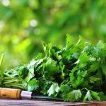 Az egyik legkedveltebb gyógynövény: koriander