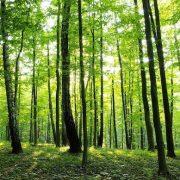 A természet és az erdei séta ereje