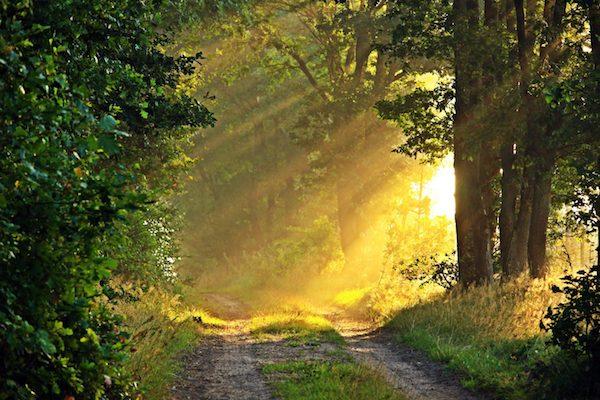 Fák között betűző napfény egy erdei sétaúton.