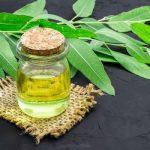 3 csodás illóolaj: teafa, kakukkfű és eukaliptusz