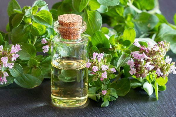 Virágzó oregánóágak és oregánóolaj egy üvegben.