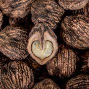 Gyógynövények candida gomba ellen