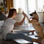 A kutya és az emberi boldogság
