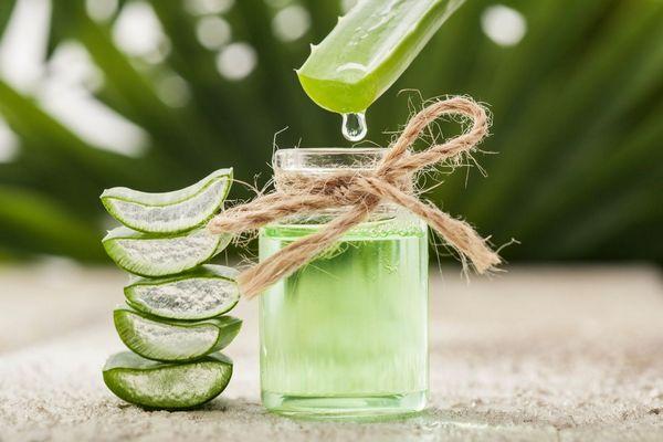 Egy asztalon egymásra rakott felszeletelt Aloe vera levelek, mellettük Aloe vera nedve összegyűjtve egy üvegben, melybe egy Aloe vera ágból a nedvét csöpögtetik.