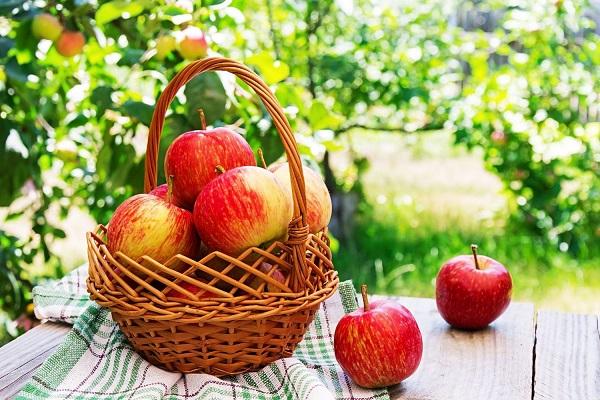 Egy asztalon, kockás terítőn egy kosárban és mellette piros almák, a háttérben almafa.