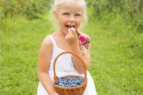 Óvodás korú szőke hajú kislány a természetben egy kosarat tart a kezében tele fekete áfonyával, közben fekete áfonyát eszik
