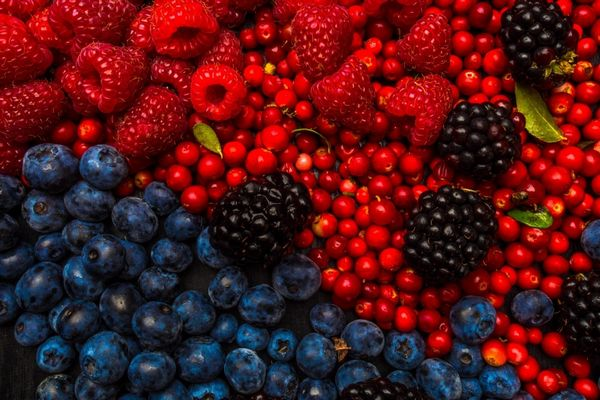 Egy asztalon resveratrolt tartlalmazó gyümölcsök, vörös áfonya, málna, szeder, fekete áfonya.