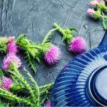 Máriatövissel a máj egészségéért