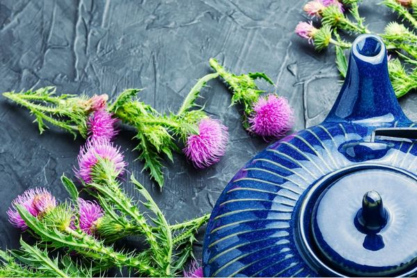 Egy szürke asztalon máriatöviságak virágokkal, mellettük kék színű teáskanna.
