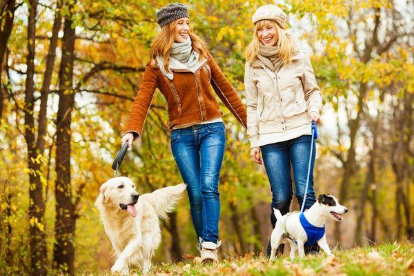 Tavaszi erdőben két fiatal lány kutyáikat sétáltatja, közben beszélgetnek, nevetgélnek.