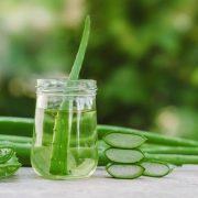 Az Aloe vera sok előnyét kihasználhatjuk