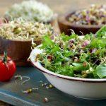 A lucernacsíra nagyon egészséges, fantasztikus ételek készülhetnek belőle
