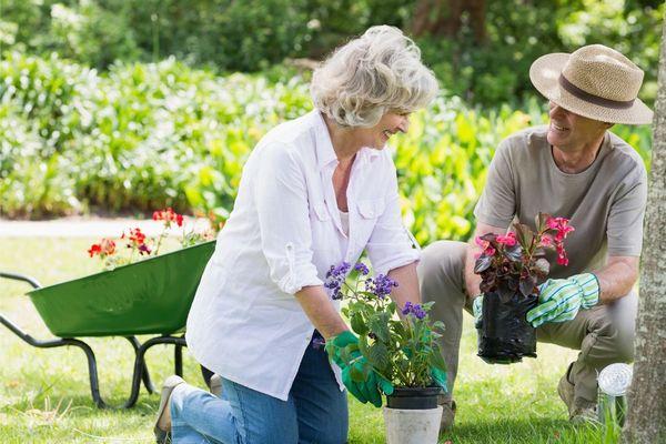 Egy idős házaspár a kertjükben kertészkednek, a mosolygó férj és feleség térdelve lila és piros virágot tart a kezében.