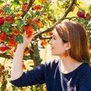 Napi egy alma valóban távol tartja az orvost?