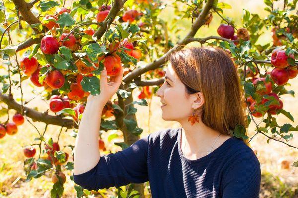 Egy gyümölcsöktől roskadó almafáról fiatal nő egy érett almát szakít le.