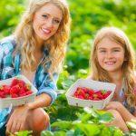 Miért fogyasszunk nyáron sok bogyós gyümölcsöt?