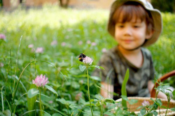 Egy kisfiú ül a füvön a réten, miközben egy vörösherén ülő darazsat néz.