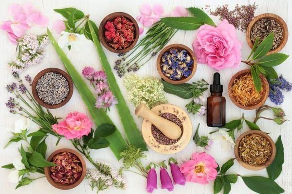 Egy asztalon gyógynövények kis tálakban szárított gyógynövények, Aloe vera, levendula, rózsa, komló, orbáncfű, kamilla, citromfű.