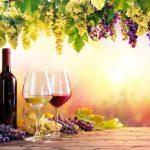 A resveratrol egészségügyi előnyei
